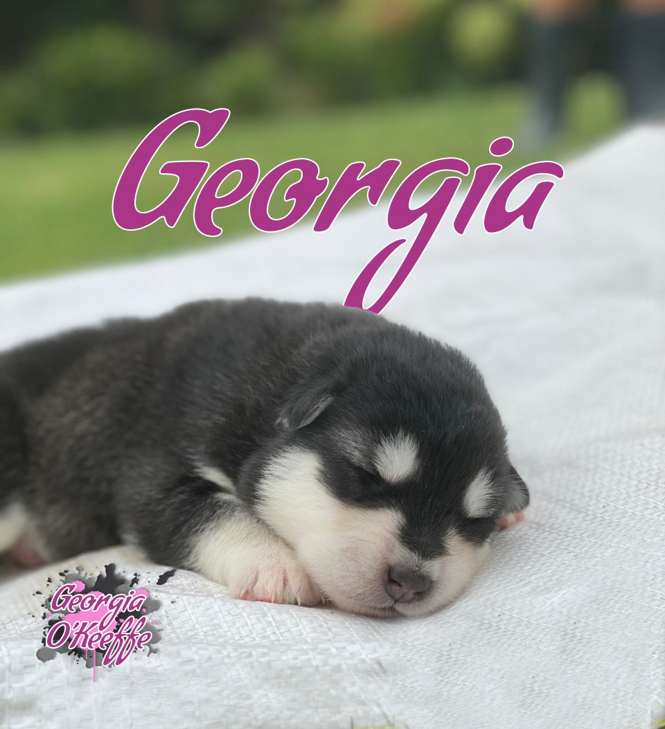 2wk georgia